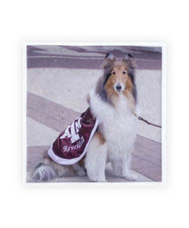 Texas A&M Reveille Single Coaster
