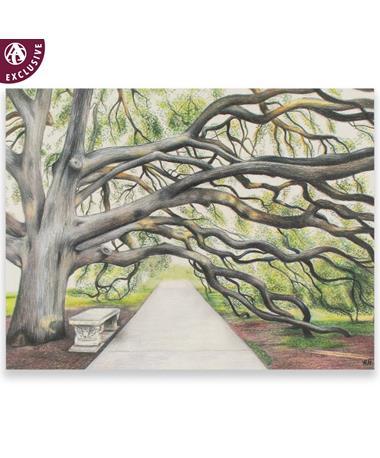 Century Tree Note Card